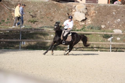 journee_du_cheval_2009_27
