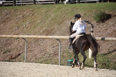 journee_du_cheval_2009_50