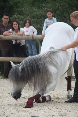 journee_du_cheval_2009_74